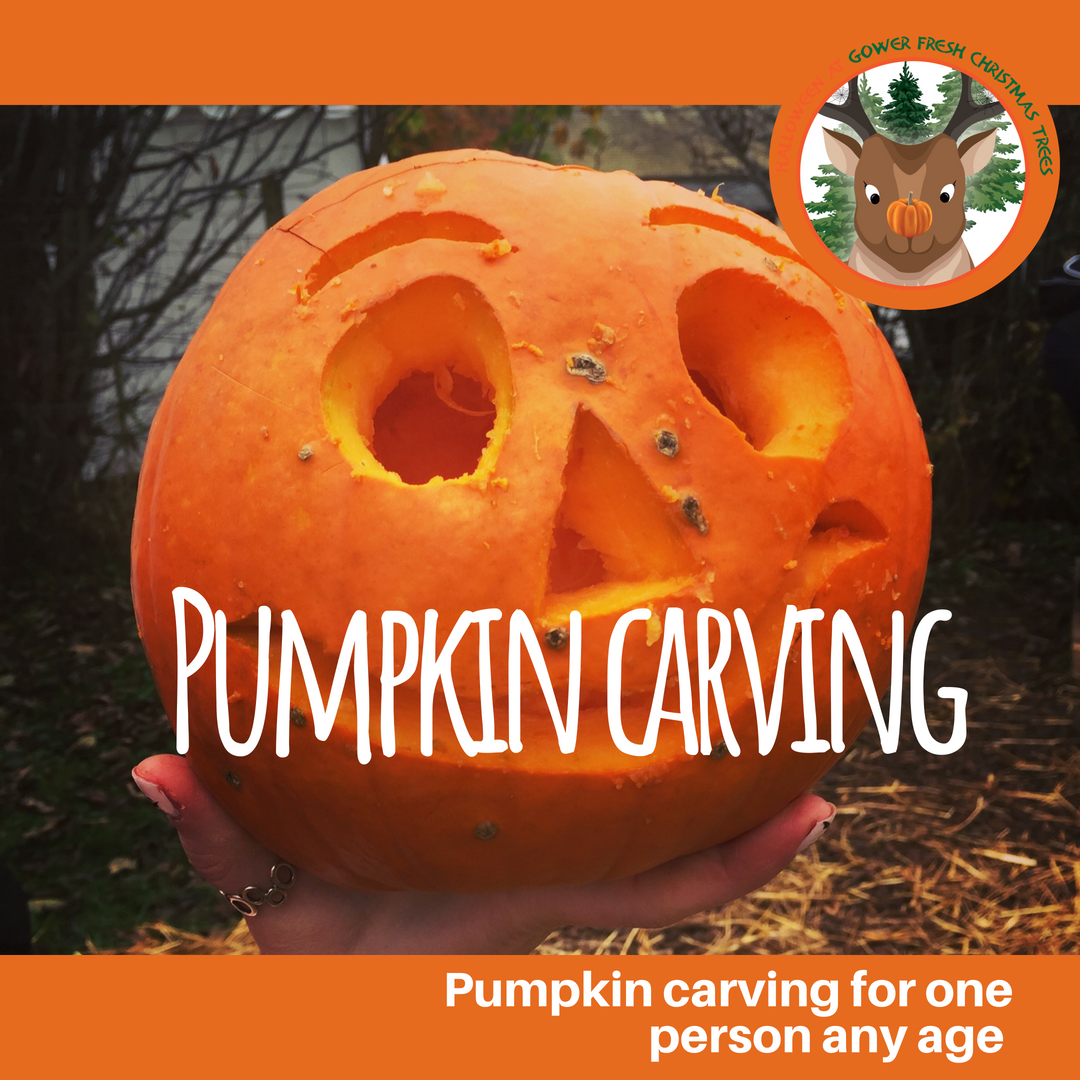 Halloween Pumpkin carving at Gower Fresh Christmas Trees