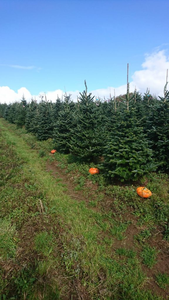 Halloween at Gower Fresh Christmas Trees