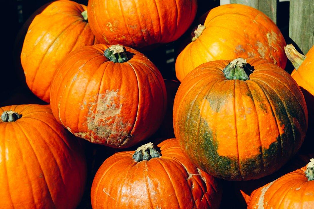 Gower pumpkins